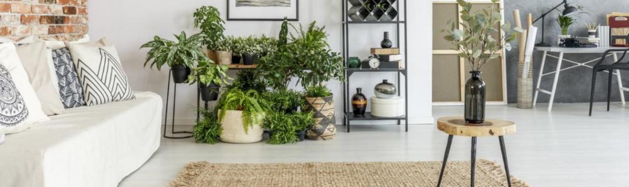 Kamerplanten TuinWereld Dordrecht
