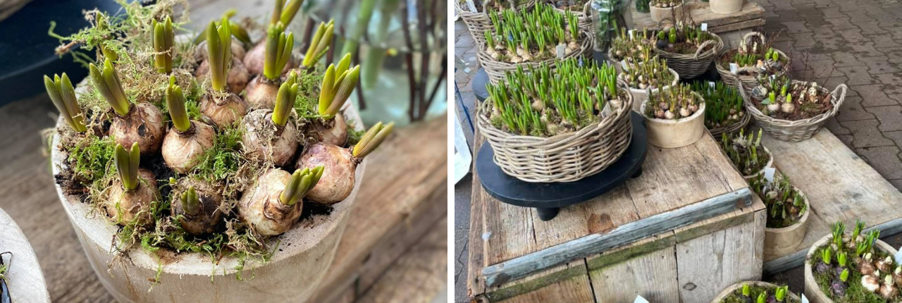 Voorjaars arrangementen Tuinwereld Dordrecht