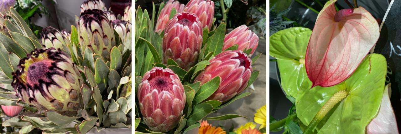 Bloemen TuinWereld Dordrecht