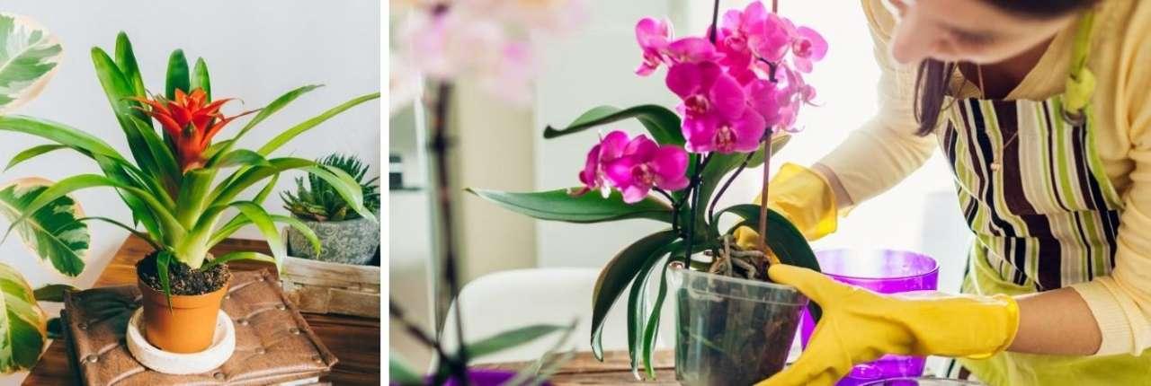 TuinWereld Dordrecht | Bloeiende kamerplanten kopen