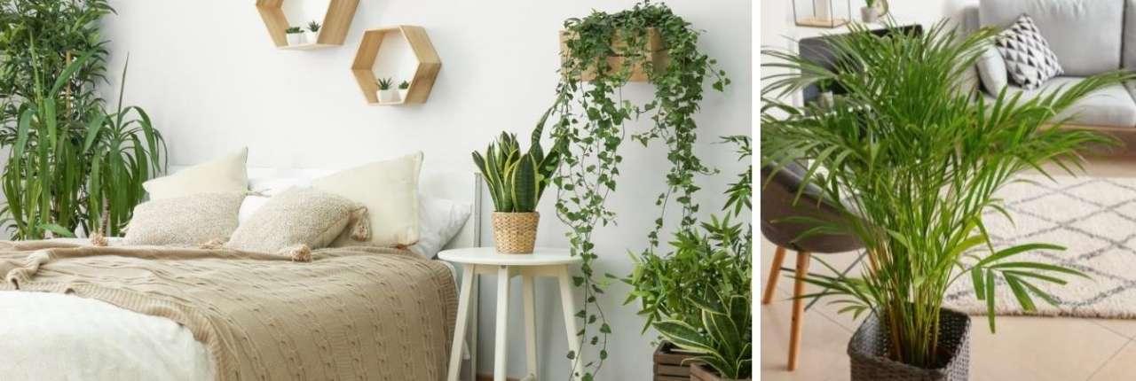 TuinWereld Dordrecht | Groene kamerplanten