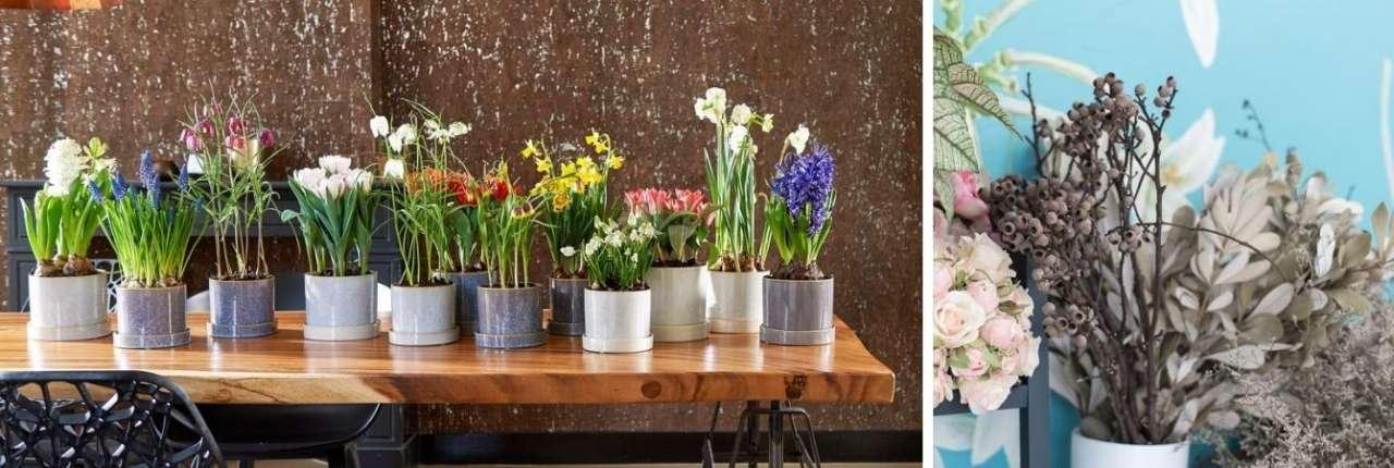 TuinWereld Dordrecht | Sfeer & Interieur | Woonaccessoires kopen